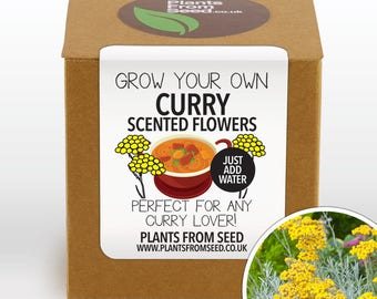 SALE NOW ON!!! - Grow Your Own Curry Scented Flowers Plant Kit