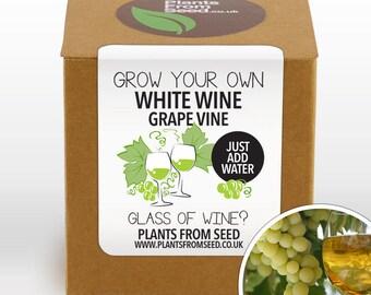 Grow Your Own White Grape Vine Kit