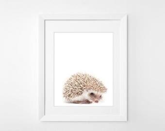 Baby Hedgehog Print, Hedgehog Print, Hedgehog wall art, Nursery Print, 8x10, 11x14, 16x20 Nursery Decor, Hedgehog art, Hedgehog Printable