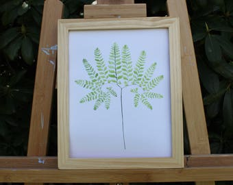 Fern No. 1  Framed Print