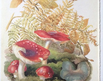 Toadstools - Vintage Botanical Book Page - Country Diary of an Edwardian Lady - Edith Holden