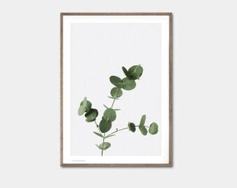 Eucalyptus - 50x70 cm