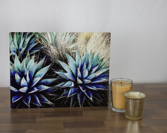 Cool and Crisp Agave, Original Photograph on Metal, 8x10, one-of-a-kind