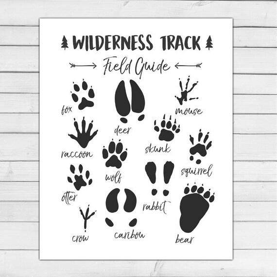 Animal Track Field Guide Woodland Nursery Woodland Wall Decal