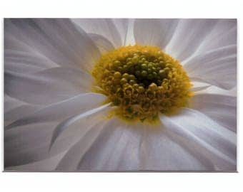 """Daisy with a heart of Gold 4""""x6"""" Metallic Print in a 5""""x7"""" matt and ready for you  to put in a frame of your choice"""