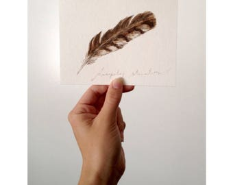 Hawk Feather - (Print)