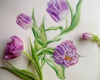Watercolir botanical illustration.Violet tulips. Art print.