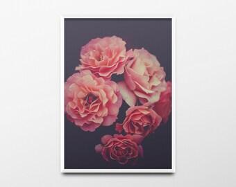 Flower Print, Flower Wall Art, Minimalist Print, Nature Print, Nature Wall Art, Pink Roses, Rose Photo, Rose Print, Rose Wall Art, Roses