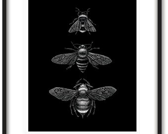 Bee Art Print Insect Art Print Limited Edition Bee Print 8x10 Bee Wall Art Black And White Art Print