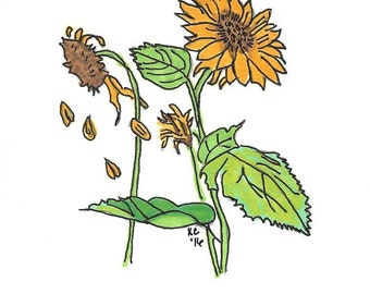 Original Art - Drawing of Sunflowers - Prismacolor Markers and Ink - Botanical Art