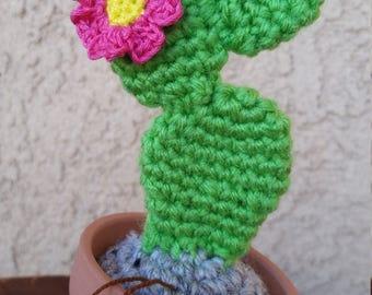 Baby Prickly Pear Cactus