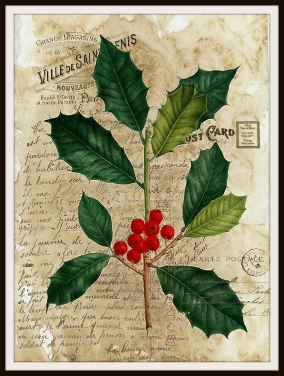Vintage art print christmas holly ephemera wall