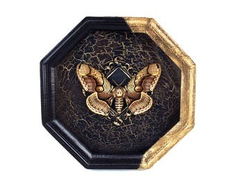 Butterfly taxidermy in a wood glass frame Brahmaea wallichii / science arthropod home wall gorhic decor education creepy insect