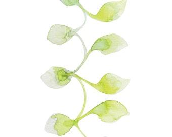 "Art Print (Gouache) - 8x10 - ""Vine"""