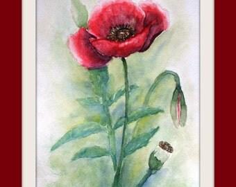 Oiginal Painting - watercolour - Poppy - Flower - Size 24x32 cm