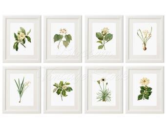 Wall Art Print Magnolia Flower Wall Decor White FLowers, Plants Prints, Vintage Flower Botanical Home Decor, Flowers INSTANT DOWNLOAD 2533