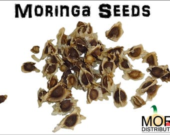 Moringa Oleifera Seeds (Semillas de Moringa) / Weights:  1 oz, 5 oz, and 10 oz