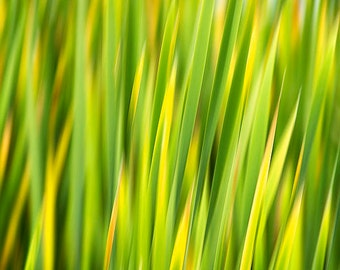 Abstract Grass, Fine Art Photograph, Abstract Art, Nature Photography, Abstract Print, Green Grass, Abstract Photograph, Wall Art Home Decor