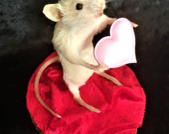 Taxidermy Valentine's Mouse - weird, curio, heart, gift