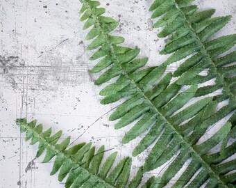Fern,Still life photography,Fern Print,Nature Photography,Botanical Print,Fern Leaf,Fern Wall Art ,Green Photography,Minimal Art