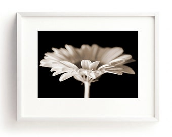 Gerbera Print, Flower Wall Art, Black and White Print, Flower Photograph, Large Nature Print, Bedroom Art, Romantic Art, Daisy Print, Sepia