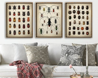 BEETLE INSECT PRINT set of 3 beetle posters, Insect print, beetle wall decor, scientific illustration, instant collection