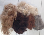 Alpaca Fibre, Mixed colours craft fleece, raw alpaca fleece, craft quality, Raw Fleece Australia