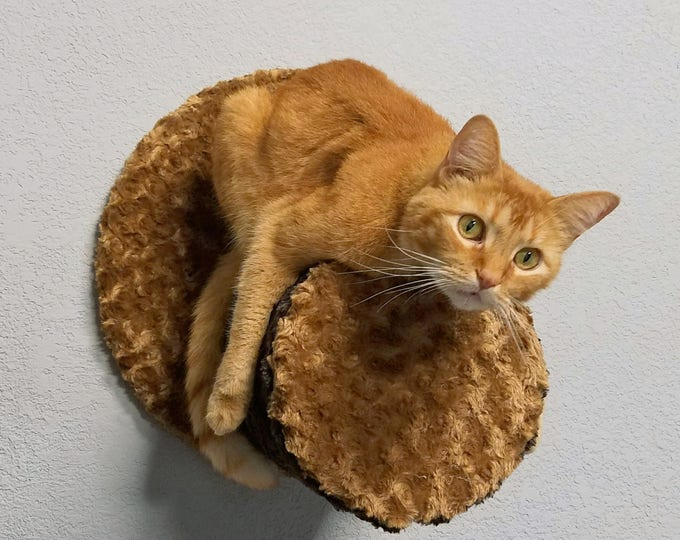 Wall Condo Perch - wall mounted cat furniture