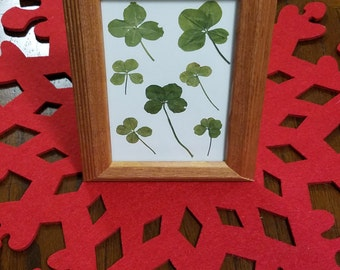 Seven Four Leaf Clovers - Framed