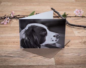 Pack of Dog Cards | Dog Greeting Cards | Blank Cards | Dog Notecards | Thank You Cards | Dog Photo Cards | Set of Dog Cards | Dog Stationery