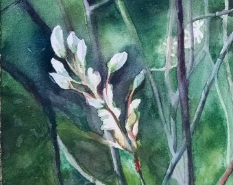 White Buds ~ original watercolor painting