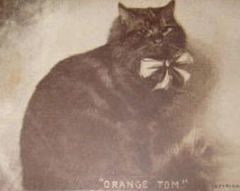 """Vintage Cat Postcard """"Orange Tom"""""""