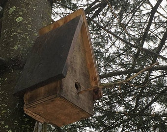 Custom made bird house; leftover pressure/weather/salt treated plywood.