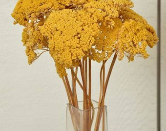 Dried Natural Yarrow Bunches | Yellow Yarrow | Dried Flowers | Wedding Decor | Fall Flowers
