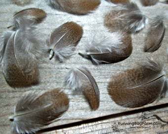 """Mini Feathers Natural Silver Pheasant Feathers Cruelty Free Feathers Real Feather Real Bird Feathers For Crafts Loose Feathers 30 < 1"""" / SPH"""
