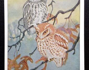 Screech Owl Vintage National Audubon Society Winter Bird Card Artist Signed Brooks