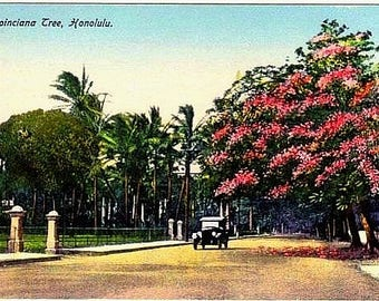Antique Hawaii Postcard - A Royal Poinciana Tree in Honolulu (Unused)