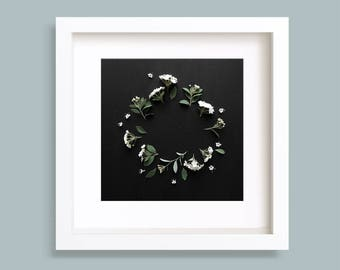Botanical Photography, Flower Wreath, White Spirea, Floral Photo, Gallery Wall Art, Black Background, Square Artwork, Various Sizes