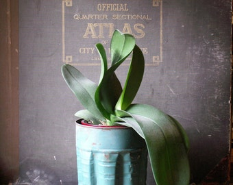 Vintage Green Metal Planter Bucket - Three Available