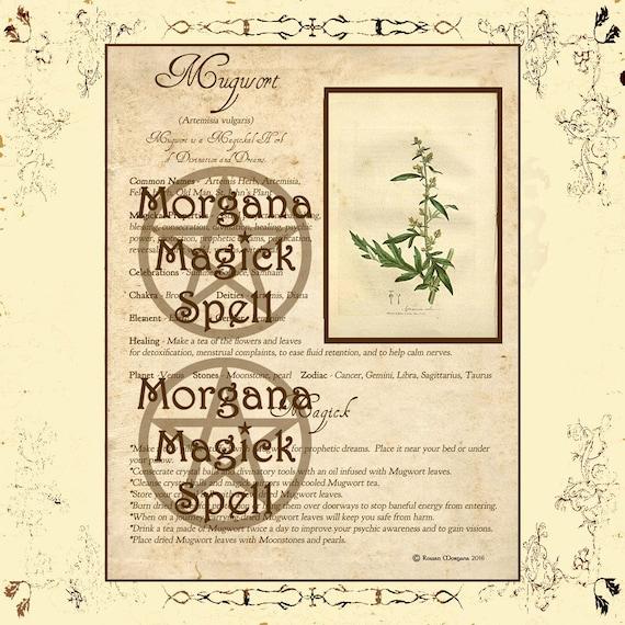Mugwort Magick Herb