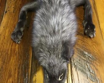 Grey Pearl Fox Pelt