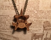 SALE - Fox Vertebrae Necklace