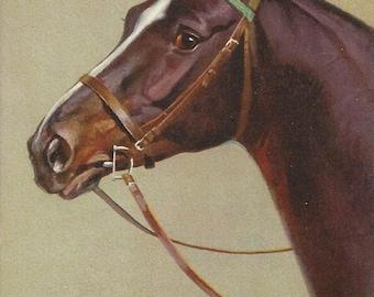 The Rivst D-ring Bay - Vintage 1940s Artist-signed Bridled Horse Postcard
