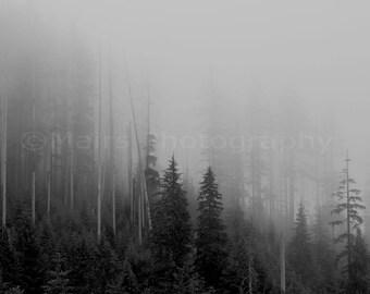 Serene Quiet Morning Oregon Coastal Forest Trees Pacific Northwest, Mist Fog Fine Art Photography signed matted 8x12 Original Photograph
