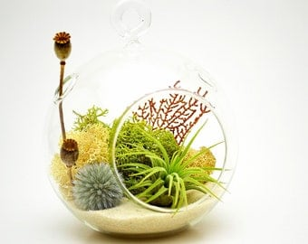 Air Plant Terrarium Kit with 4