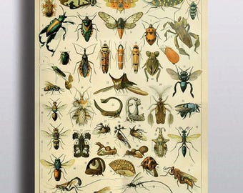 Printable Art Antique Insect Chart Digital Download Insect Art Instant Download Art Prints Illustration Vintage Prints Wall Art Wall Decor