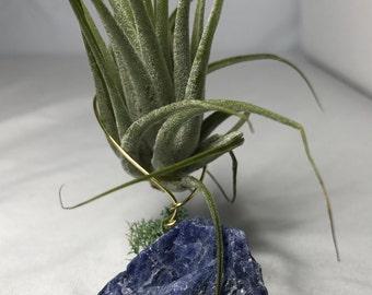 Blue Sodalite Crystal with Air Plant - Tillandsia Ionantha - Air Plant Geode