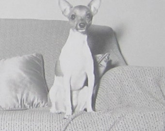 Adorable 1950's Chihuahua Dog On The Couch Snapshot Photo - Free Shipping