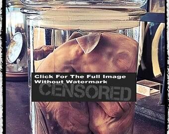 Large Fetal Sheep in jar