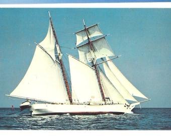 """Vintage Postcard of Sailing Ship, """"Shenandoah"""" Clipper Schooner Sails Out of Vineyard Haven  S111"""